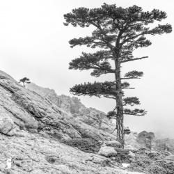 Pins Lariccio de Bavella, montagne de Bavella, photos de forêts en Corse, photographe Corse, Montagne Corse